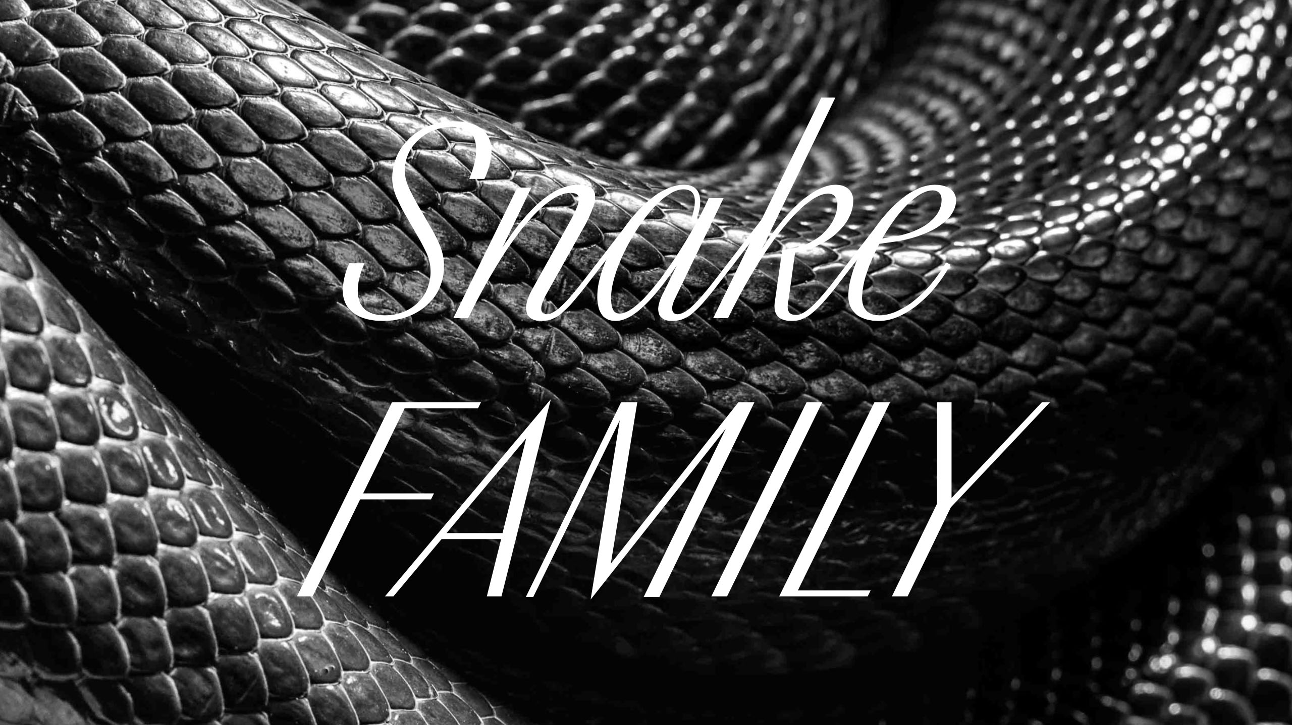 Snake family